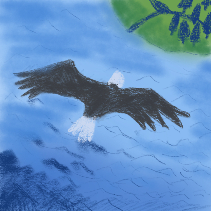 illustration of a bald eagle soaring above a mountain lake