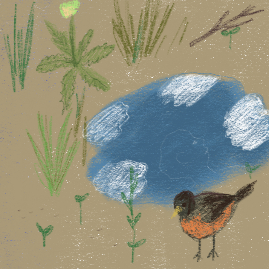 illustration of a nature scene with a bird in the grass next to a puddle that shows a translucent reflection of a human