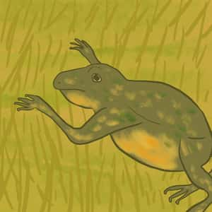 illustration of a frog sitting in the grass