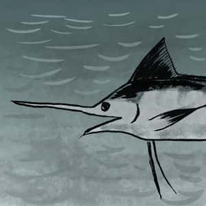Illustration of a marlin in the water