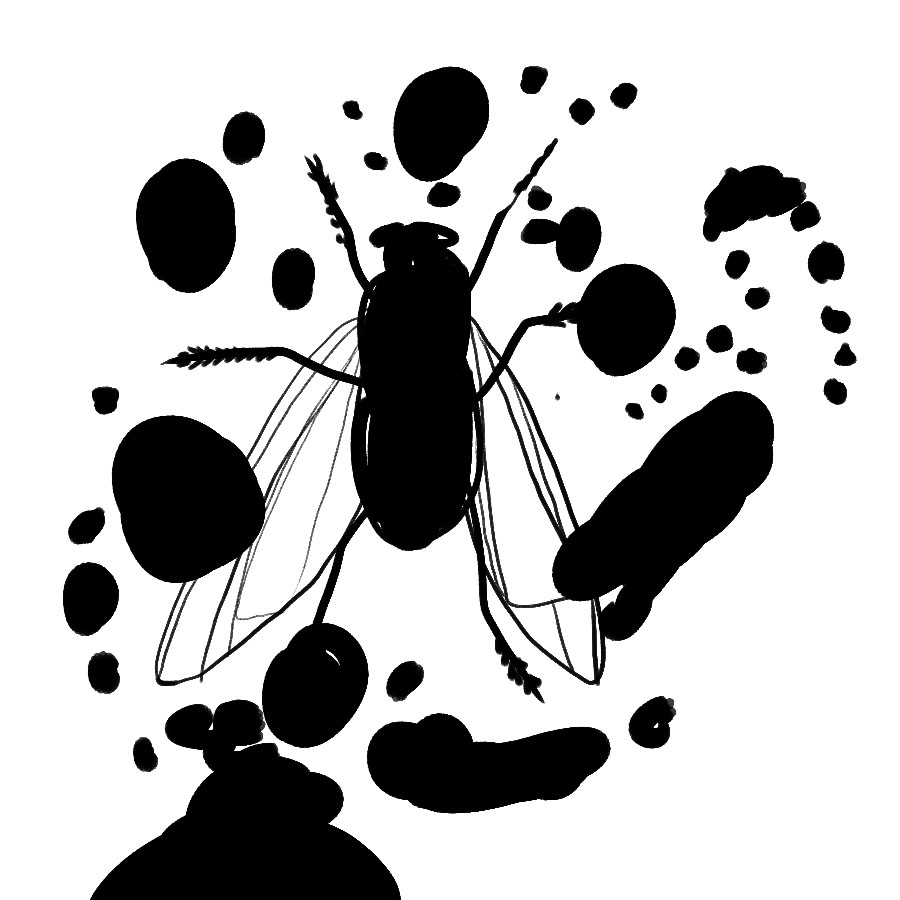 fly surrounded by black dots and splotches as if part of a rorschach test